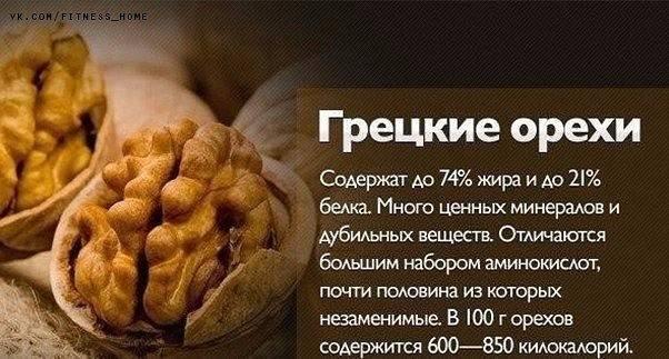 Грецкий орех: полезные свойства, противопоказания, польза и вред