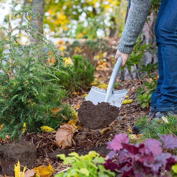 Как выполнятся подкормка деревьев и как выбрать удобрение