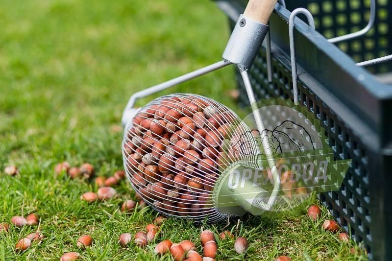 Технология послеуборочной обработки и сушки зерна