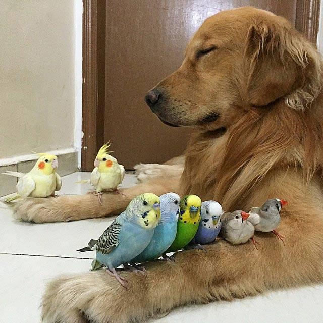 Можно ли собаке давать тыквенные семечки от глистов - все о здоровье