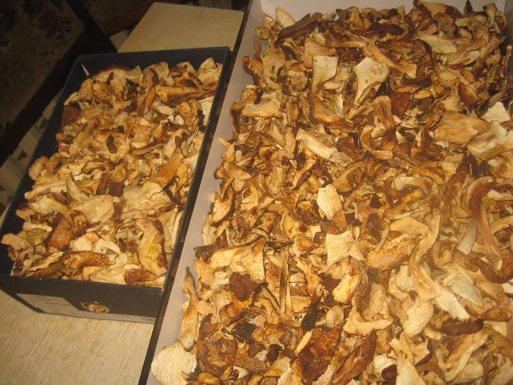 Как сушить грибы? какие грибы сушат? сушка грибов в домашних условиях :: syl.ru
