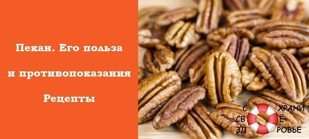 Орех пекан: польза и вред для организма, сколько нужно съесть в день