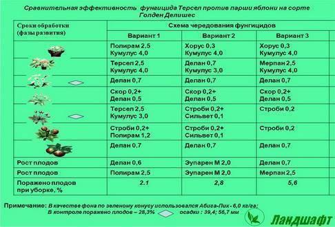 Грецкие орехи из чили: описание, качество, особенности, отличия от других сортов, польза и вред и другие нюансы