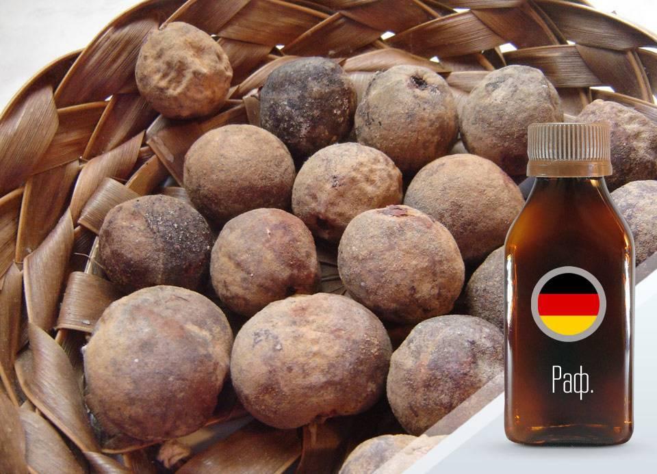 Орехи - все какие бывают, список с описанием, фото и свойствами | фрукты и ягоды