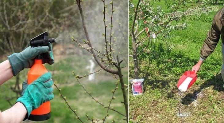 Когда удобрять плодовые деревья в саду и как это делать правильно