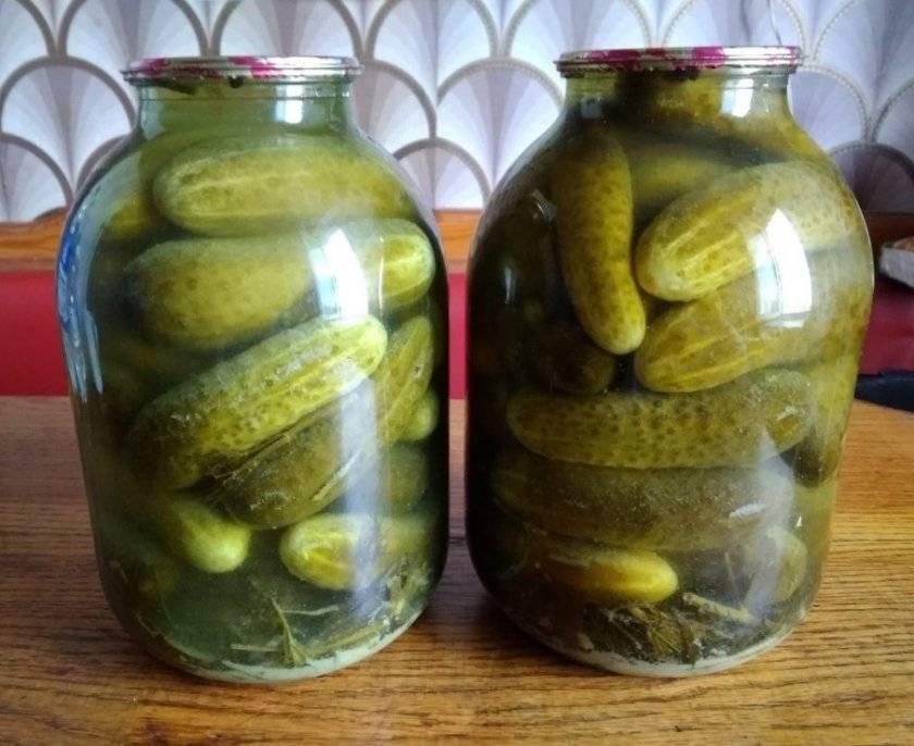 Соленые огурцы холодным способом на зиму – 8 рецептов на 3-х литровую банку с пошаговыми фото