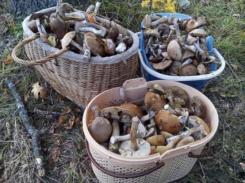 ᐉ засолка грибов маслят на зиму в банках - godacha.ru