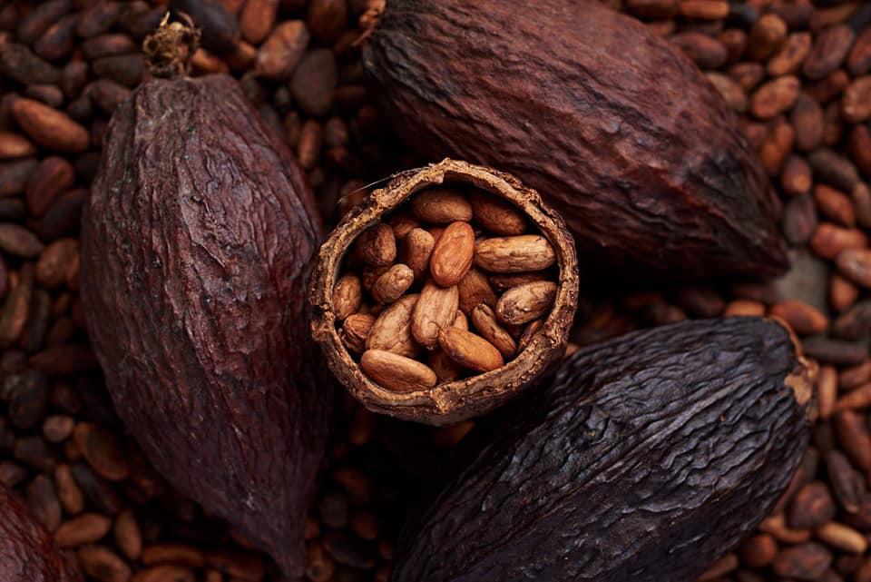 Чем хорош шоколадный орех макадамия и как его правильно есть