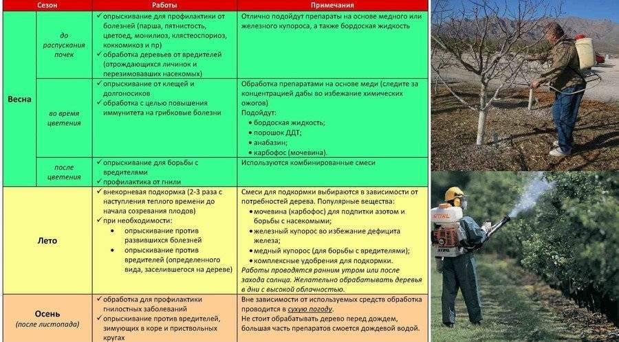 Как посадить и вырастить миндаль в условиях открытого грунта