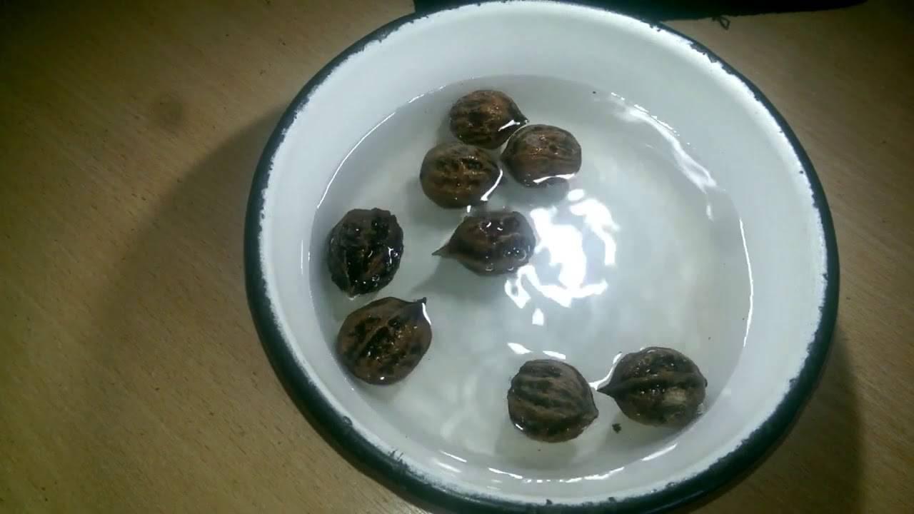 Как вырастить грецкий орех из орешка – дачные дела