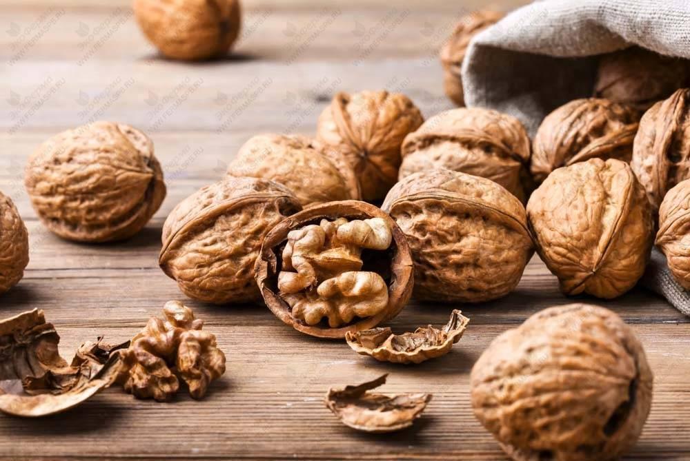 Разновидности грецкого ореха американской, французской и итальянской селекций — портал ореховод