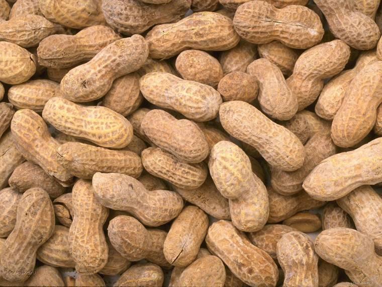 Как растет арахис. как на даче вырастить арахис. в статье рассказано о том, как растет арахис и как его самостоятельно вырастить