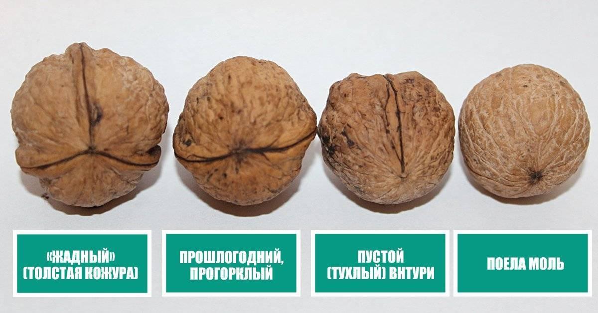 Гост 16833-2014: ядро ореха грецкого. технические условия