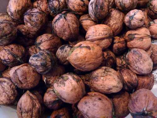 Когда собирать грецкие орехи? когда можно собирать грецкие орехи зеленые