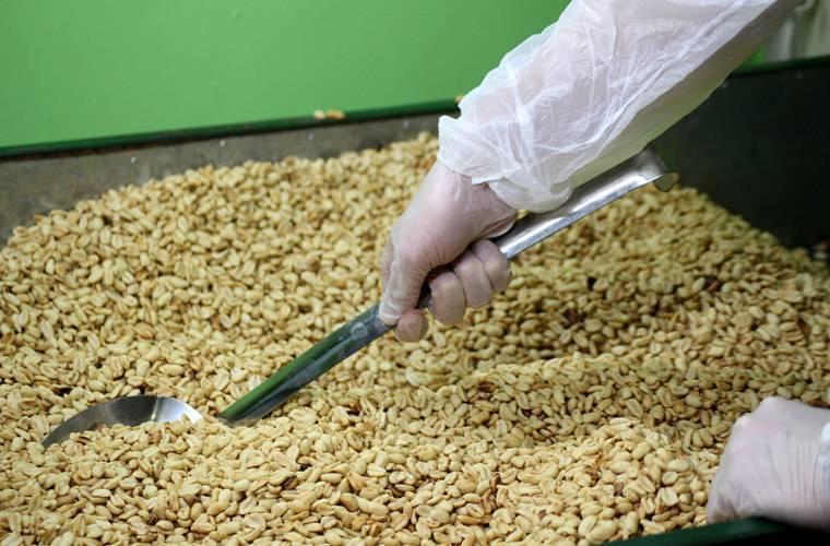 Процесс промышленной переработки грецких орехов