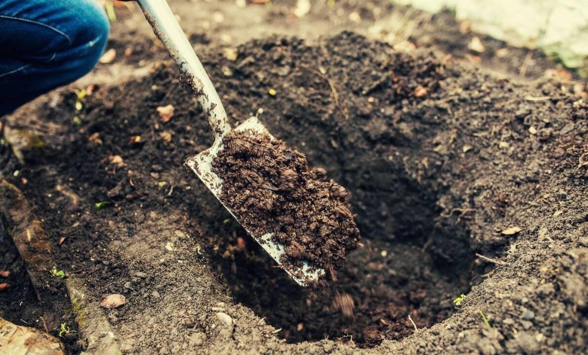 Подготовка почвы и посадка плодовых деревьев в саду: фото, видео как разбить сад