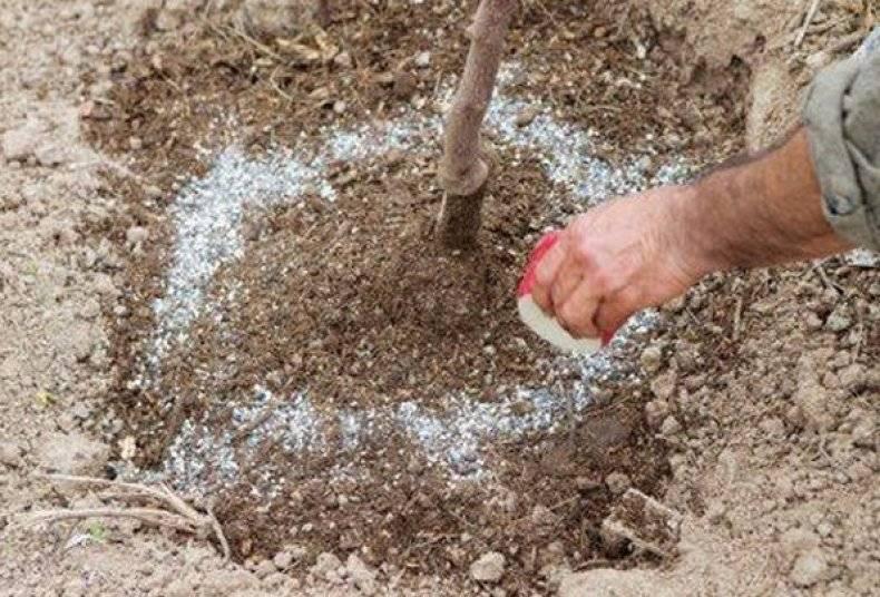 Чем удобрить деревья? удобрения для подкормки хвойных и других деревьев в зиму и ранней весной. как подкармливать садовые, мандариновые и других деревья в августе?