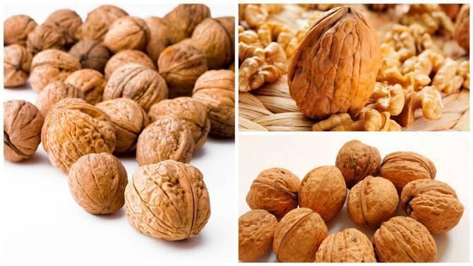 Разновидности грецкого ореха американской, французской и итальянской селекций