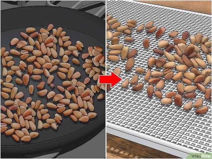 Как пожарить кедровые орехи в скорлупе и без: как правильно приготовить к употреблению на сковороде или в духовке