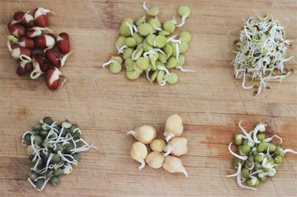 Пророщенная пшеница: польза и вред, как едят, применение для женщин, детей, мужчин, при беременности   народная медицина   dlja-pohudenija.ru