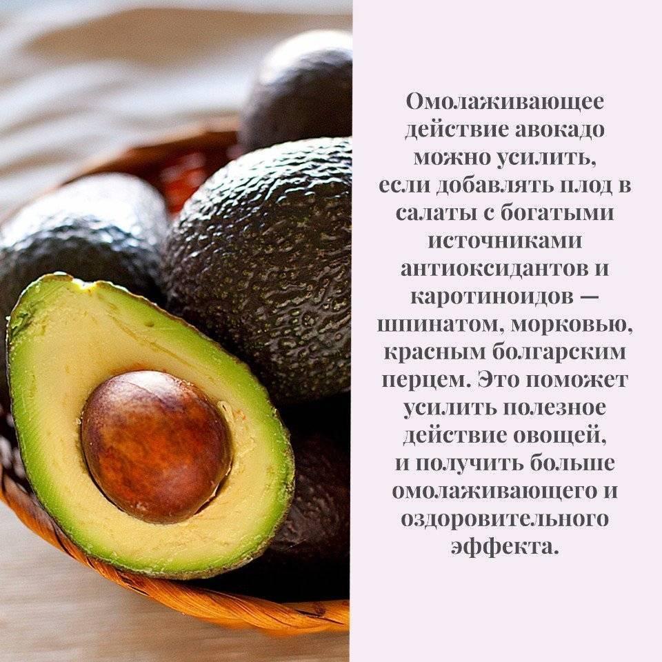 Чем полезна косточка авокадо: положительные свойства, способы применения