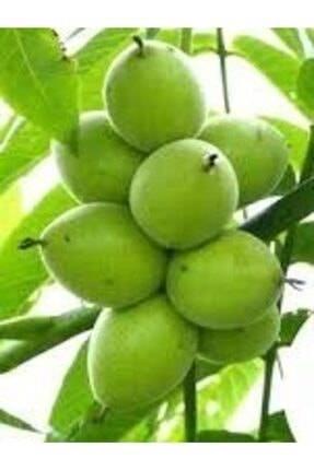 Урожайность грецкого ореха с 1 дерева и 1 га. карликовые деревья
