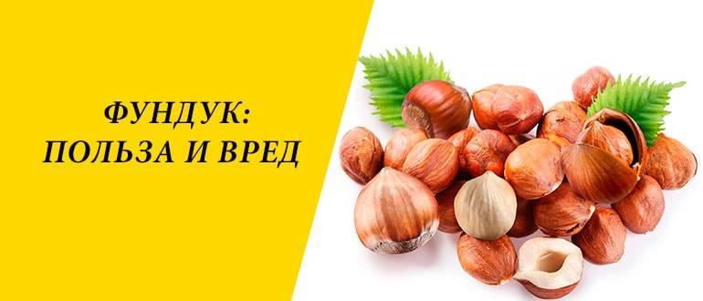 Фундук (орехи): польза и вред для организма