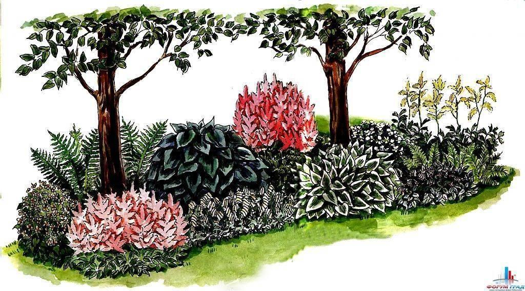 Удачное соседство для туи – от выбора растений до готовых скетчей. сажаем по правилам