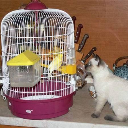Вместе или врозь — попугай и другие животные в одном доме