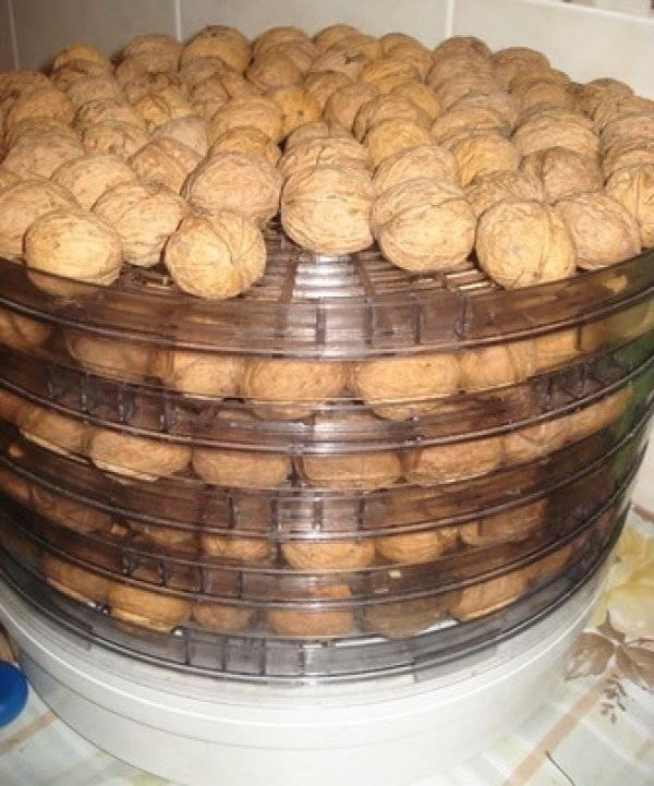 Как подсушить грецкие орехи в домашних условиях в духовке