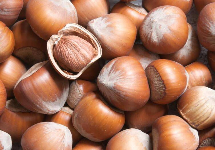 Орехи фундук: польза и вред, сколько и как можно есть