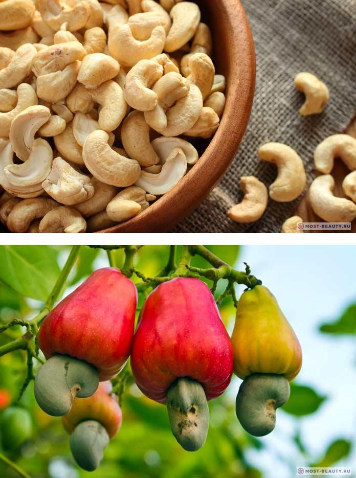 Полезные свойства ореха кешью, противопоказания, суточная норма