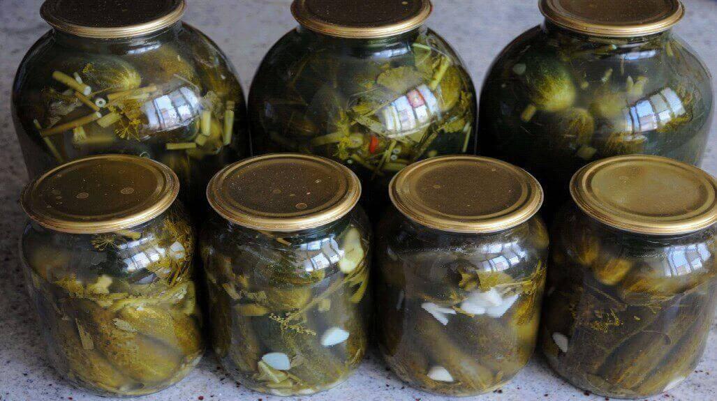 5 рецептов засолки огурцов холодным способом на зиму в банках