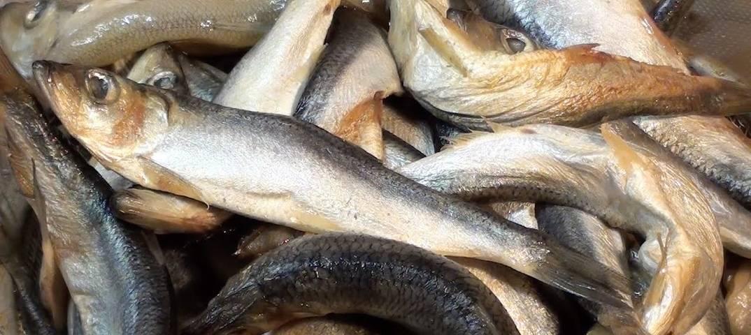 Как солить воблу, окуня, бычки, уклейку, плотву и другую речную рыбу в домашних условиях (рецепт + фото)