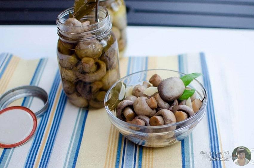 Маринованные шампиньоны в домашних условиях быстрого приготовления и на зиму: рецепты с фото