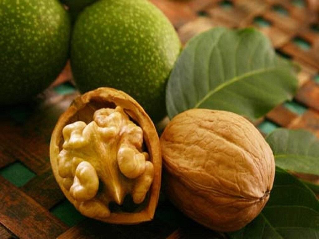 Польза грецкого ореха — 10 лечебных свойств для организма человека, а также вред и противопоказания
