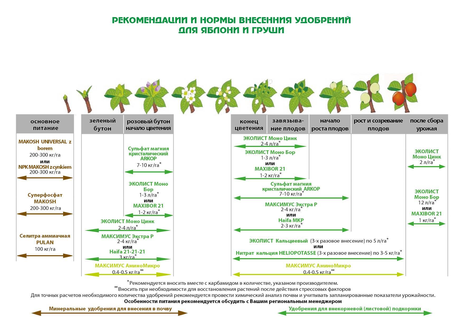 Подкормка плодовых деревьев: виды и назначение удобрений