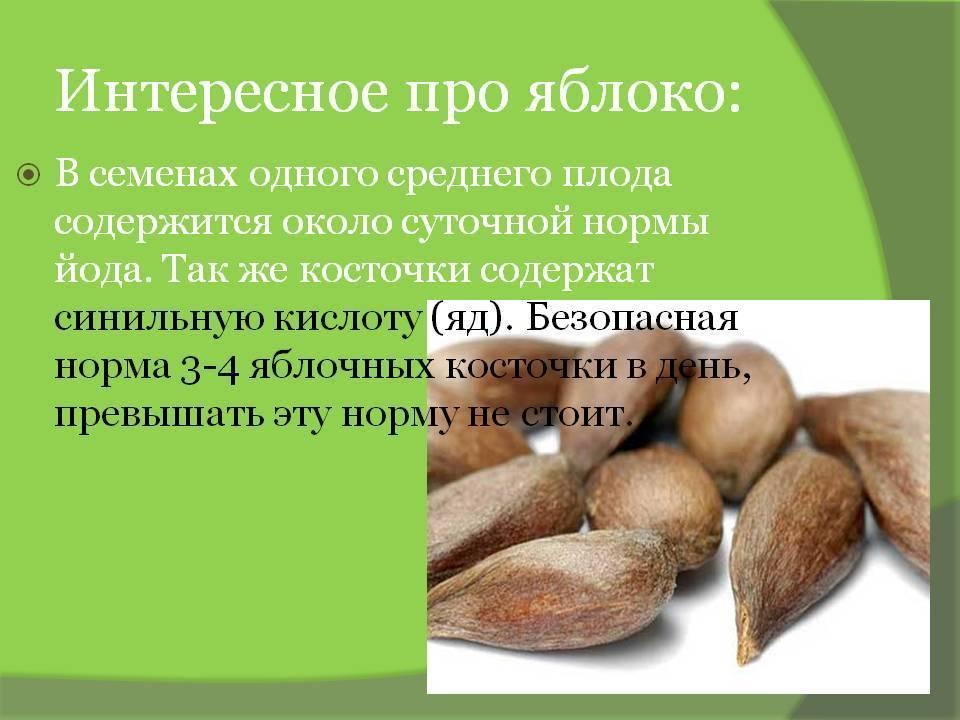 Вред и польза косточек от яблок для здоровья человека