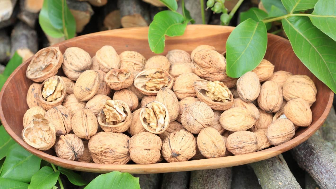 Как открыть орех макадамия без ключа подручными средствами как открыть орех макадамия без ключа подручными средствами