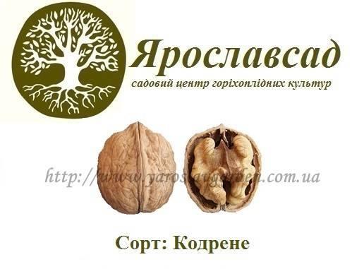 Карликовые сорта грецкого ореха