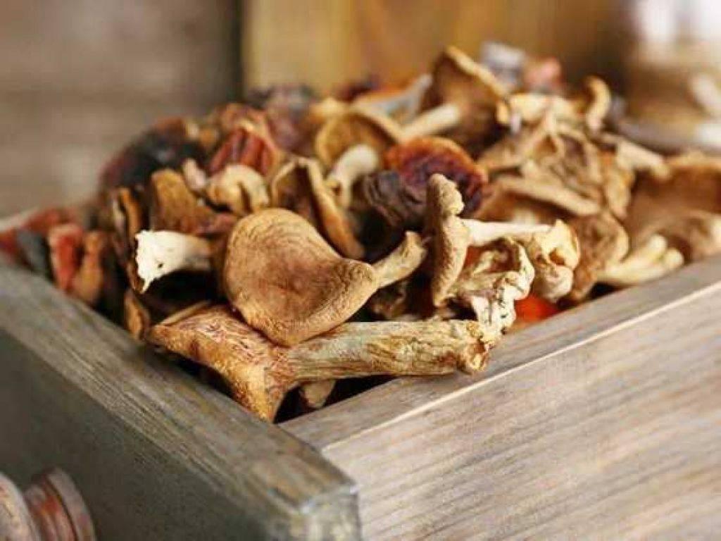 Сушеные грибы – полезные советы и рекомендации ????