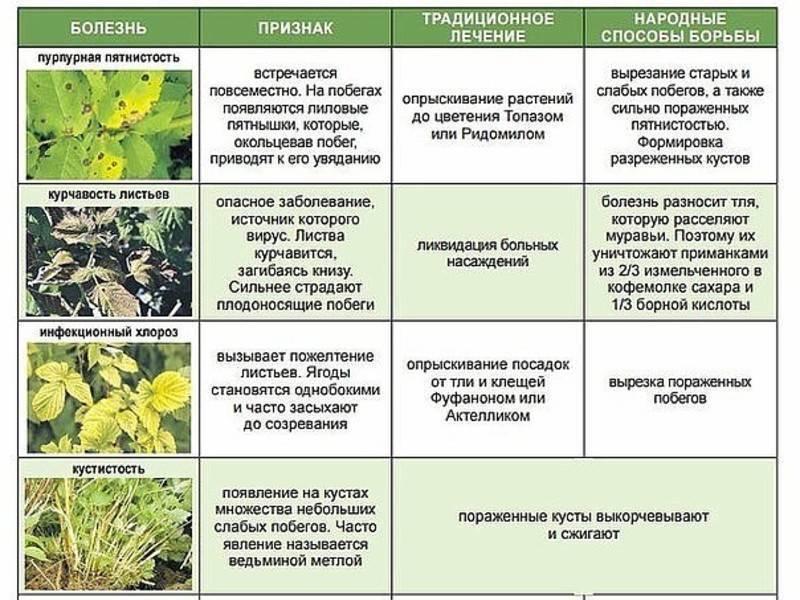 Описание и характеристики лучших сортов и видов миндаля, посадка и уход