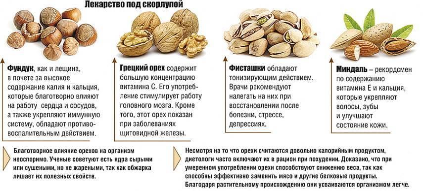 Виды лещины (фундука) для средней полосы, южных и северных районов россии