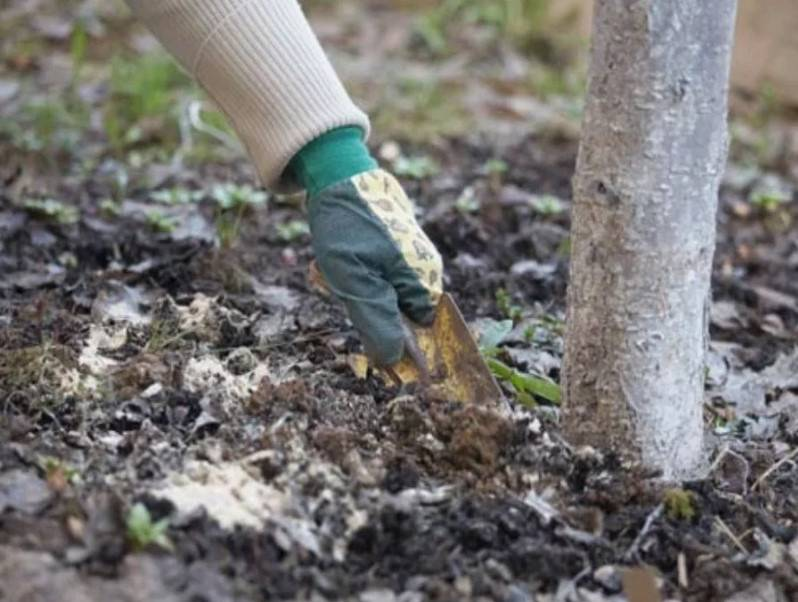 Чем и как подкормить молодые и старые яблони весной до, во время и после цветения: схема внесения удобрений