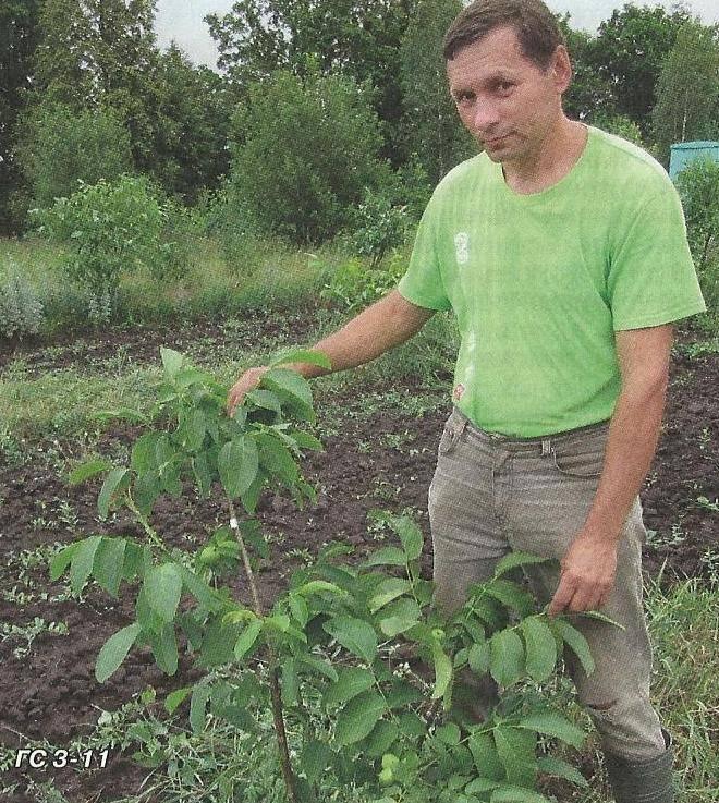 Вступление в ореховодство, часть 3. посадка орехового сада. | fermer.ru - фермер.ру - главный фермерский портал - все о бизнесе в сельском хозяйстве. форум фермеров.