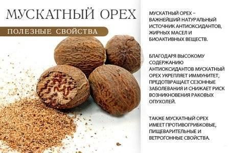 Мускатный орех: польза и противопоказания, способы применения