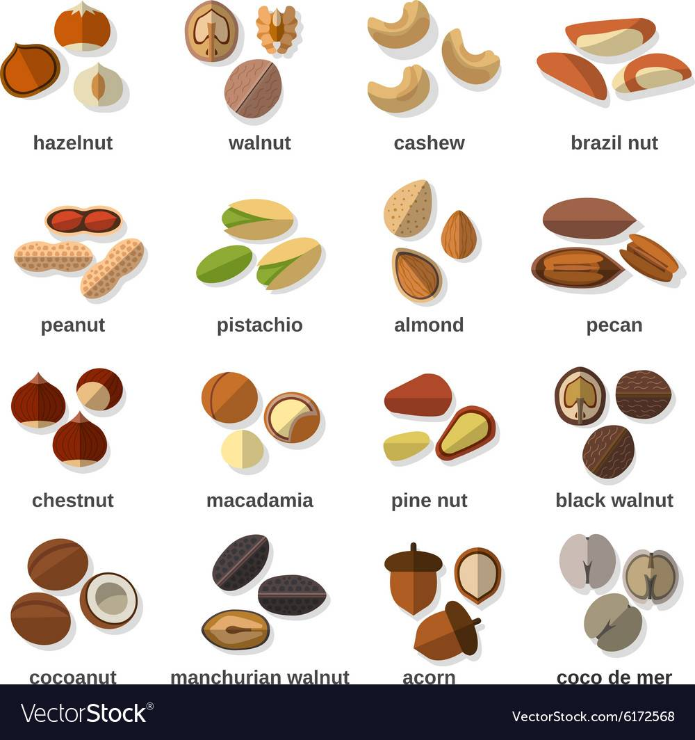 Список орехов — таблица видов по названиям, составу и калорийности