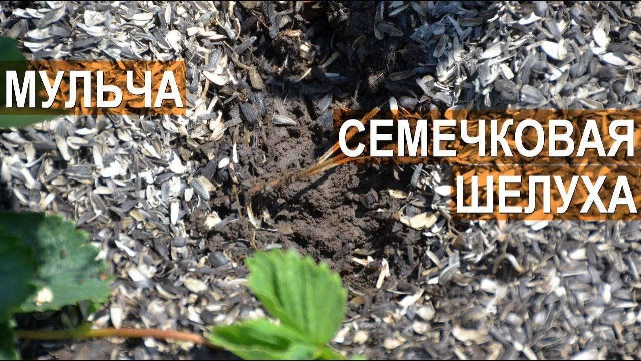 Шелуха от семечек как удобрение – как применять правильно