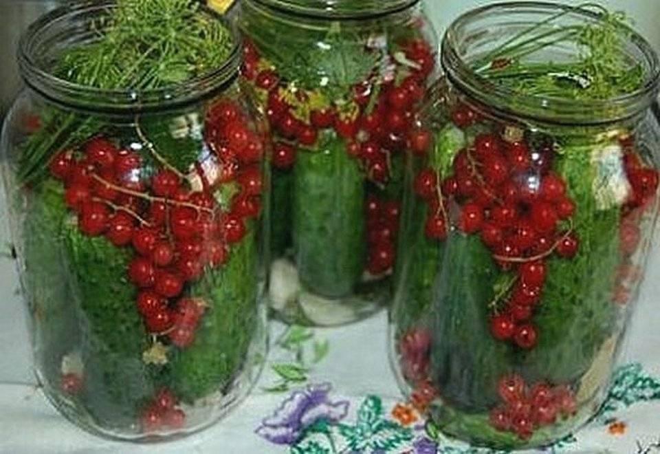 Огурцы всоке красной смородины. консервирование для лентяек. вкусные и надежные заготовки по-быстрому