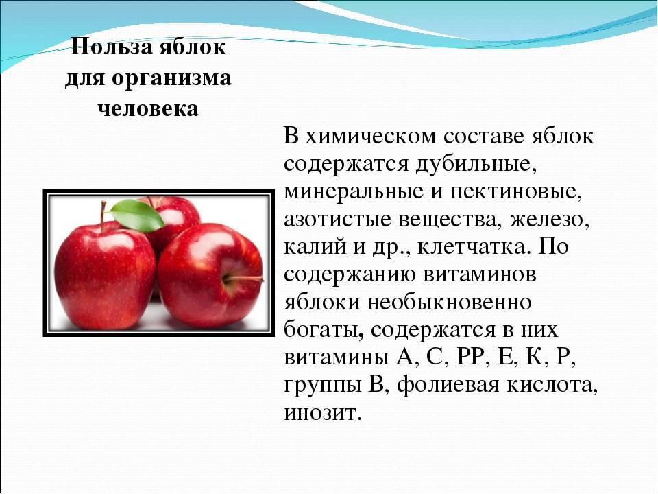 Польза яблок — 10 доказанных свойств для организма человека, а также вред и противопоказания